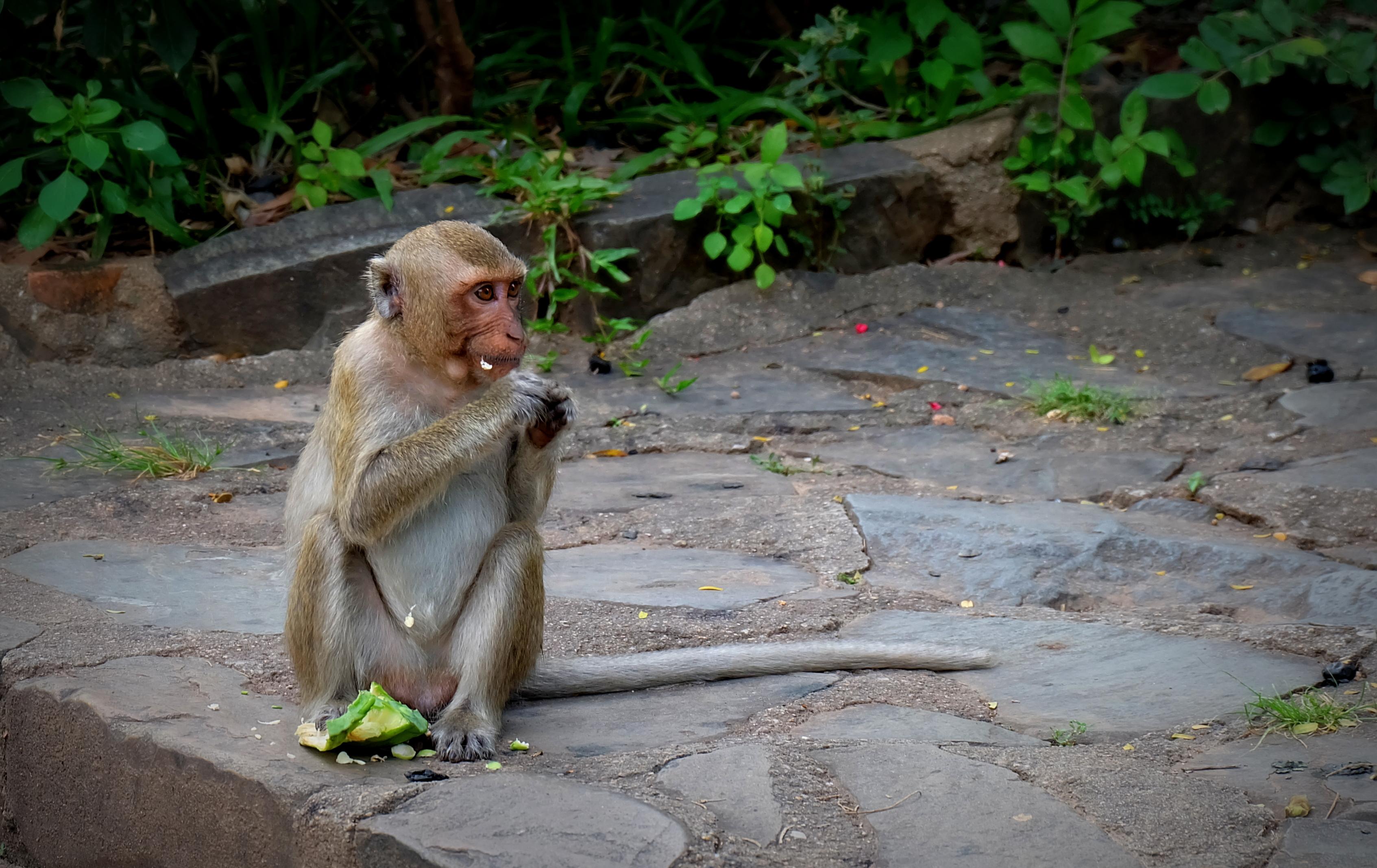 Cambodia blog (2)